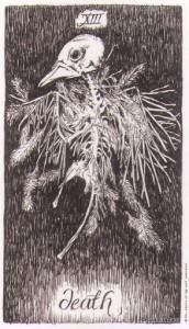 Wild Unknown Tarot - Sách Hướng Dẫn 15