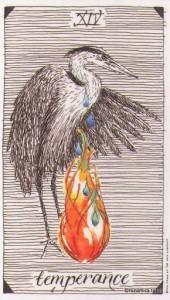 Wild Unknown Tarot - Sách Hướng Dẫn 16