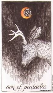 Lá Son of Pentacles - Wild Unknown Tarot 1
