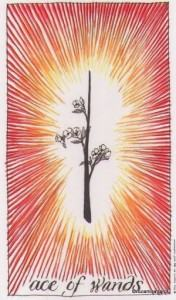 Lá Ace of Wands - Wild Unknown Tarot 1