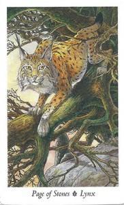 Lá Page of Stones - Wildwood Tarot 1