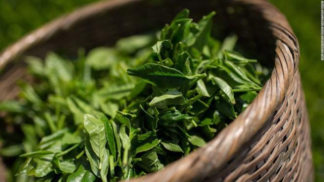 """Hình Ảnh Xông lá trà xanh - Chăm sóc, phục hồi và làm đẹp """"vùng kín"""" cho phụ nữ sau sinh Kênh Kiến Thức Và Tri Thức"""