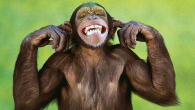 Hình Ảnh Top 25 hình nền Khỉ đẹp đáng yêu nhất thế giới - Động Vật Kênh Kiến Thức Và Tri Thức